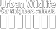 Urban Wildlife - Our Neighbors Animals