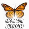 Image of a monarch butterfly